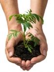 Misija įmanoma: žaliosios dovanos