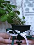 PASIGAMINKIME PATYS: žaliuojanti aromatinga dovana
