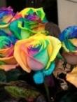 Kaip nuspalvinti rožes vaivorykštės spalvomis